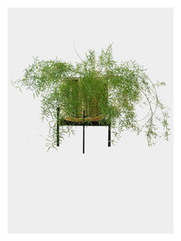 Zenith Planter – Brass / Black stand